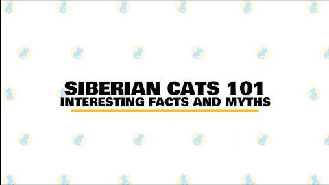 Siberian Cats : Fun Facts & Myths
