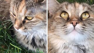 Meow Dare You – Cat Rolls Her Eyes At Owner For Telling Her To Stop Eating