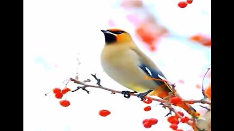 Amazing Natural birds never seen before