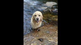 Catching River Rocks