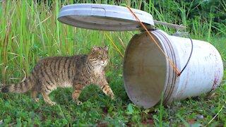 Simple Wild Cat Trap -- Wild Cat Trap Using Plastic container