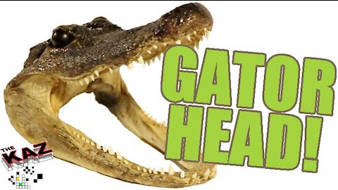 Check out the alligator head I found at the town-wide garage sale in Warrensburg, NY!