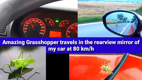 Amazing Grasshopper travels in the rearview mirror of my car at 80 km/h