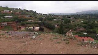 SOUTH AFRICA - KwaZulu-Natal - Pig and dog interaction (Video) (j3V)