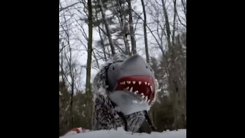 Hilarious Shark Puppet Gets Himself In The Most Hilarious Situations!