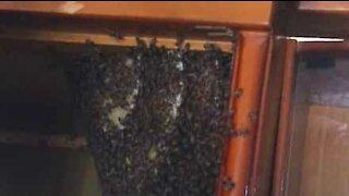 Bee hive found inside cupboard