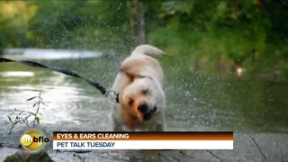 PET TALK TUESDAY - EYE AND EAR CLEANING