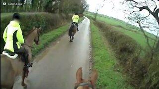 Ce cheval dérape sur une route glissante