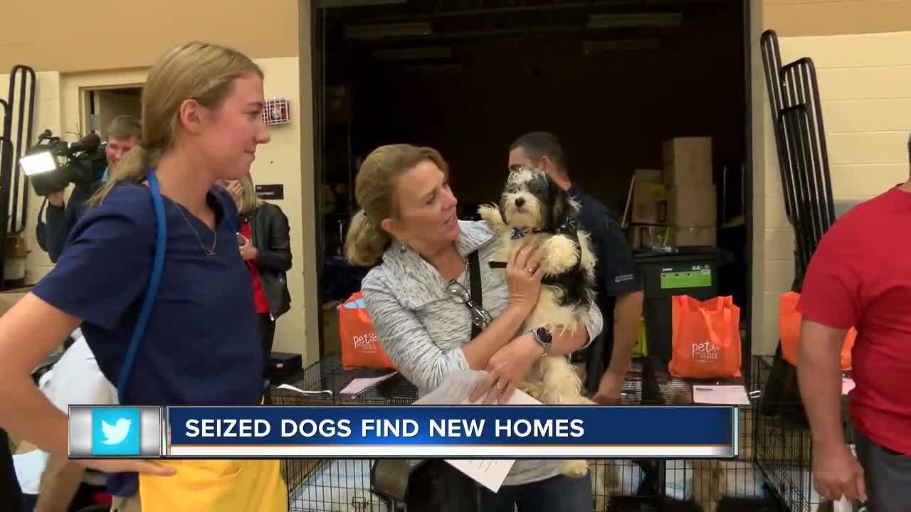 Seized dogs find new homes in Hillsborough County