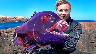 How the most unbelievable fish captured