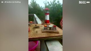 Hummingbirds gather to enjoy their very own mini water park!