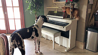 Funny Cat and Great Dane Have a Stare Down