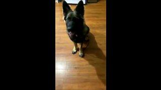 Adorable dog friendly training wow