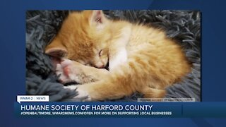Support the Humane Society of Harford County's Virtual Kitten Shower