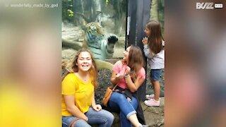 Tigre gioca con dei bambini allo zoo