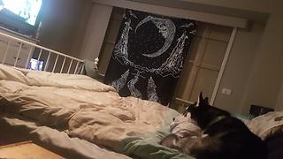 Husky loves watching David Attenborough