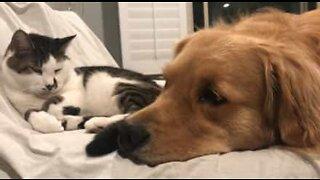 Cão e gato formam uma adorável amizade