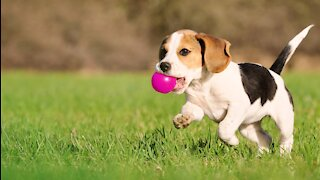 3 Simple Things to Teach Your New Puppy