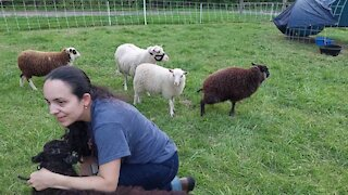 Hanging out with Our Shetlands
