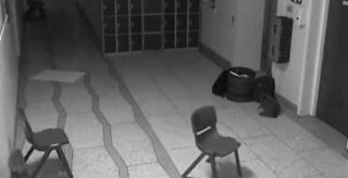 Ghost visits Irish school