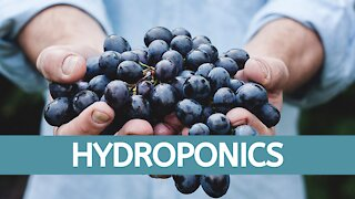 Hydroponic's Beginner System