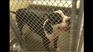 Fort Pierce city leaders vote to continue contract with Humane Society of St. Lucie County