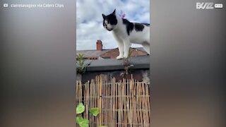 Ces deux chats surprenants discutent entre eux