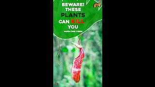 5 Most Deadliest Plants around the World *