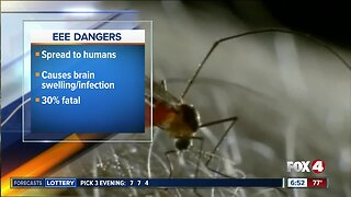 Deadly mosquito-borne virus that causes brain swelling in humans has been detected in Florida