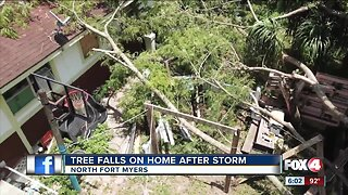 Tree falls on Fort Myers home