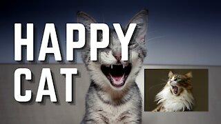 HAPPY, HAPPY, HAPPY CAT!