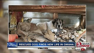 Rescued Dog Finds New Life in Omaha