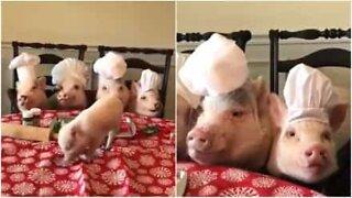 Des petits cochons cuisiniers aident au repas de Noël