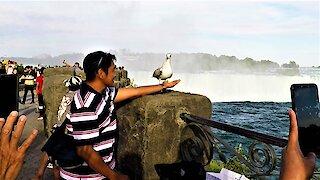 Friendly seagull steals the show at Niagara Falls