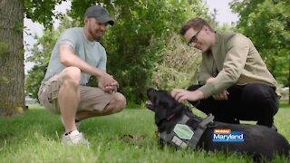Purina Dog Chow - Service Dog Salute