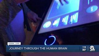 Journey Through the Human Brain