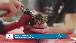 Help Pets In Need // Denver Animal Shelter