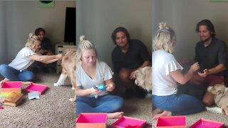 Guy uses doggy to surprise girlfriend with proposal