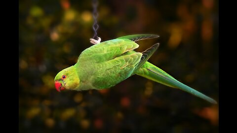 Parrot with character!!!