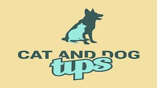 5 Cat Myths Debunked!