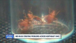 Bed bugs creating big problems across northeast Ohio
