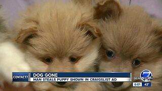Craigslist seller has puppy stolen from Colorado home