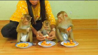 Monkey, Cute Baby Monkey