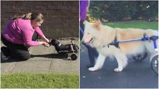 Cães com deficiências também vivem vidas completas