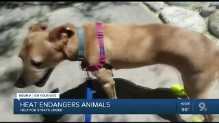Heat warning: Protect pets--and strays
