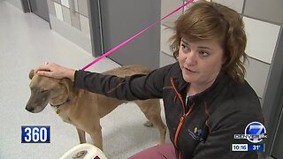 Pet detectives help find missing furry friends in Colorado