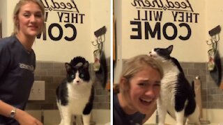 Cat begs to have back scratched, has hilarious reaction to it