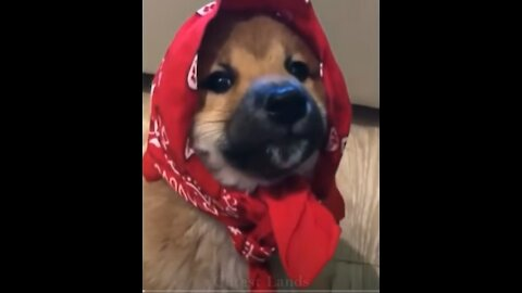 💗Cute And Funny Pets   Try Not To Laugh To These Pets Compilation #20💗
