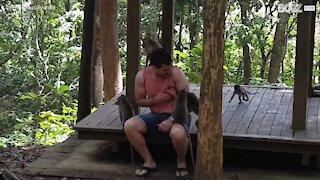 Ces singes gâchent la visite d'un touriste