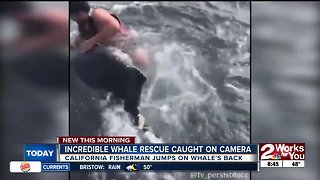 Incredible whale rescue caught on camera